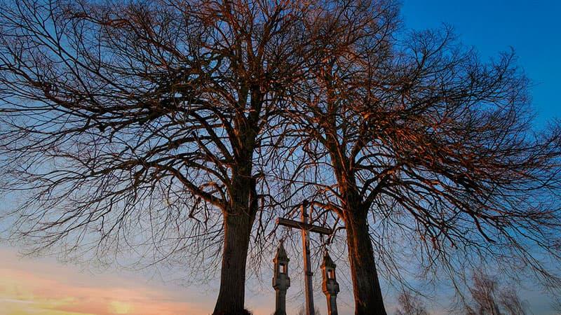 Деревья на могиле: традиции и выбор